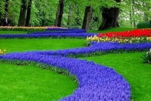 Цветы для бордюров фото