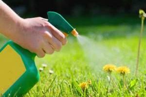 Гебрициды для обработки газона