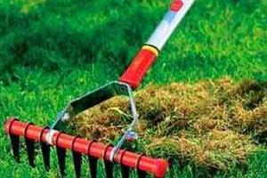 Мульчирование почвы газона