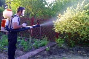 Обработка кустарников весной фото