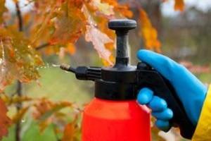 Препараты для опрыскивания деревьев