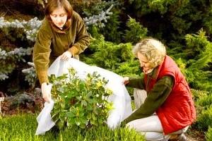 Подготовка кустарников на зиму фото
