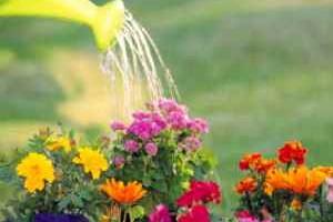 Правильный полив цветов