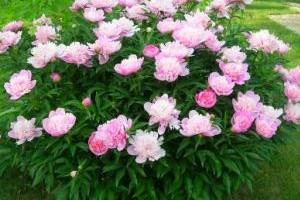 Цветы солитеры фото