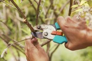 Подготовка садовых деревьев, кустарников и растений к зимовке
