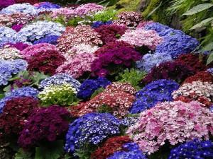 cvety-v-sadu-dizajn