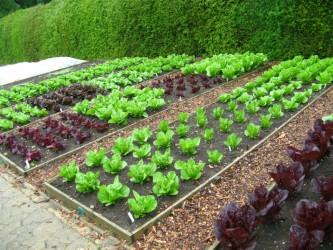 дачный дизайн для урожая
