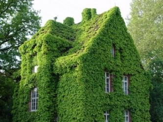 дом с плющом