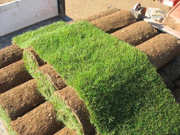 газоны рулонные
